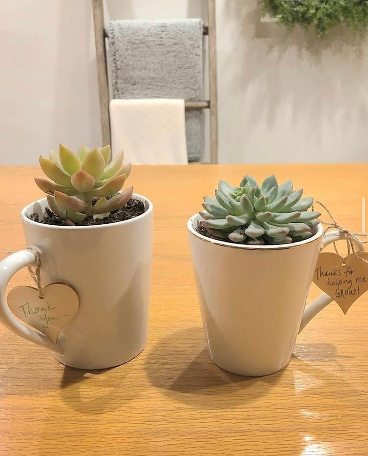 Referral Gifts: Potted Succulents
